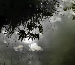 Reflect (clive777) Tags: reflect sky london babylonrestaurant kensington pond cloudreflection kensingtonroofgardens babylon reflection water