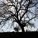 Naked Trees (25)