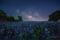Cobalt hues &  midnight blues (Rajesh Jyothiswaran) Tags: flowersplants ilce7rm2 landscape longexposure lupine milkyway sky sony spring texas tranquil astrophotography flower flowers fog grass greenery morning morninglight night nightscape scenic starry stars starscape sun sunrise trees wildflower
