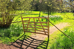 No Entry ........ (acwills2014) Tags: gate spring daffodils green fence character wood noentry