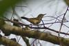 DSC_1536 (Saleh Reza) Tags: bird pakhi nature ru rajshahi university campus bangladesh