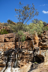 Kalbarri_WA_vegetation on the clifs_6741