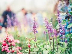 000044840015 (matthew_image) Tags: 80mm f28 mamiya m645 645 1000s film kodak portra 160 iso iso160 filmisnotdead films portra160 flower flowers hong kong hongkong hk hongkonger color colours colour colorful colors colourful