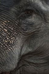 Face of an elephant (Syahrel Azha Hashim) Tags: mammals trunk sony 2016 shallow holiday nopeople simple details a7ii eye ilce7m2 thailand dof touristattraction getaway handheld closeup skin vacation destination prime animal naturallight colorful sonya7 travel syahrel hatyai 35mm colors light traveldestination colorimage elephant detail