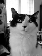_DSF5520 Morgan (Dante Guazzo Giorgio) Tags: 2015 cumiana felini