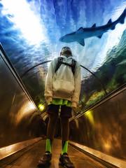 With the Sharks (/\ltus) Tags: seaworld sandiego sharks aquarium springbreak california socal southerncalifornia