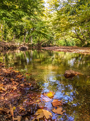 Autumn Leaves Near The River (Tassos Giannouris) Tags: autumn leaves river trees green water greece nature reflections creek forest landscape