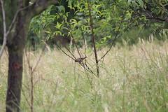 IMG_6111 (Pablo Alvarez Corredera) Tags: burro gato gata gallina rural medio vida hierba alta pradera praderio espigas arbol arboles burrito orejas orejitas gatita
