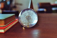 Last Forever (L. Köbe) Tags: minolta analog film maxxum dynax bubble glas kugel pollen ewigkeit forever vintage 50mm 17 colorplus kodak 200 vitra germany basel weil rhein swiss badenwurttemberg