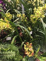2017-03-18_0549i_waldor (lblanchard) Tags: 2017flowershow displaygarden waldor