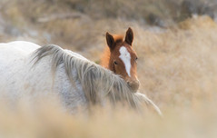 Baby foal love (overthemoon3) Tags: wildhorses wildlifephotography northdakota nature
