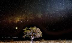 Milky way in Etosha (marko.erman) Tags: namibia etosha pan national park safari girafe waterhole tree night stars milkyway