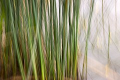 Reeds Of Wodonga (Dirk Wallace) Tags: abstract blur reflection tree art water reeds sony australia victoria icm wodonga a850 intentionalcameramovement sumsiongarden