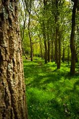behind the tree (WisemanChris) Tags: blue trees people tree green grass bells spring nikon united kingdom bark trunk isle wight d90