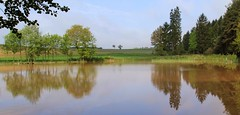 (Linda6769 (OFF)) Tags: reflection tree germany pond village thuringia willowtree schackendorf