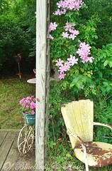 Arbor, Enchanted Garden (Bluebird Becca) Tags: wood bike yellow metal vintage garden chair purple secret rustic clematis lavender rusty trellis climbing arbor entry enchanted impatiens