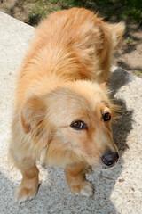 IMG_2933 (VIPevent) Tags: bitzi serbien kettenhund