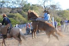 DSC_0704 (jaramillohectorsergio) Tags: criollo caballos campana palenque jinete poncho gauchos botas monta gaucho doma jineteada sanpedrodejujuy cachullani