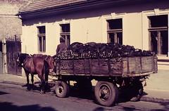 BUDAPEST etc 1975 pic057 (streamer020nl) Tags: horses horse hungary budapest slide scan 1975 cart ungarn magyarorszag cokes magyarország szentendre hongarije kossuthlajosutca up8496
