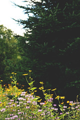 (Valerie Manne) Tags: flowers nature vertical adirondacks spruce