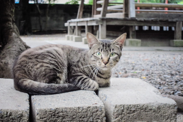 Today's Cat@2013-08-24