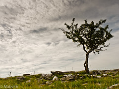 At The Edge (Mabvith) Tags: uk england tree clouds wind pavement yorkshire limestone yorkshiredales settle feizor