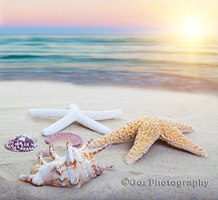 Sea Shore (Stevemc2011) Tags: ocean blue sunset sea summer vacation sun white beach nature water beauty star coast sand marine colorful warm waves mood bright starfish vibrant background object sandy decoration scenic shell souvenir conch mollusk positivity