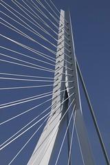 Erasmusbrug / de Zwaan Rotterdam (Lex Eggink) Tags: bridge holland netherlands rotterdam erasmus nederland erasmusbrug flickriosapp:filter=nofilter uploaded:by=flickrmobilegebeurtenissenwereldhavendagenvlieland