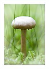 Fairy tale in my garden (Marjo1963) Tags: mushroom mos garden gras tuin paddenstoel 092013