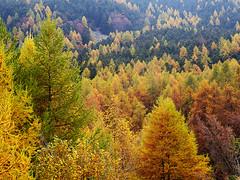 Amprimo2013_PB011030_1 (stegdino) Tags: autumn tree fall albero autunno gamewinner herowinner storybookwinner storybookbtd2nd