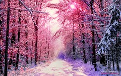 Pastel Snowy Road, Color Processing by DMS (d.m.s. studios) Tags: pink beautiful landscape photography colorful snowy pastel infrared lavendar vision:sunset=0569 vision:plant=0689 vision:outdoor=0843