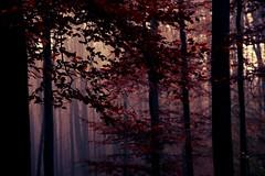Autumn Dress (debeeldenplukker) Tags: wood autumn trees forest autumncolors canon30d debeeldenplukker