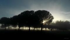 Contraluz en el páramo (anpegom) Tags: luz contraluz arboles pinos niebla siluetas paramo palencia rayosdesol castillayleón dueñas montestorozos nubesbajas anpegom potd:country=es luzatravesandolosarboles