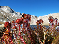 Frozen Flowers at Summit Lake, Colorado (Batikart) Tags: park travel flowers blue schnee autumn light vacation sky plants usa sun mountain lake holiday snow mountains macro green art fall ice nature colors closeup