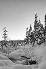 Deep Snow (yukonchris) Tags: winter blackandwhite bw snow canada cold ice nature water beauty forest landscape day north yukon daytime wilderness northern whitehorse genre snowscape borealforest northof60 southernyukon canon7d efs1585mm