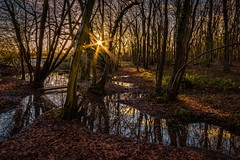 Woodland flood (James Waghorn) Tags: winter england sun tree water woodland reflections countryside kent nikon stream flood sigma ultrawide maidstone lightroom sigma1020 d7100 blinkagain blinksuperstars bearstedgolfcourse