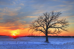 Solitary (2) (Matt Champlin) Tags: life winter sunset snow cold nature standing canon outdoors hope oak colorful snowy farm farming freezing auburn adventure future upstatenewyork chilly lonely tall solitary lonetree 2014 windchill standingstrong lonetreeinfield