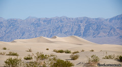 Mesquite Flat Dunes (jukkarothlauronen) Tags: usa unitedstates deathvalley