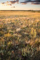 Dry Tallgrass Prairie (jmeissen) Tags: usa nature ecology minnesota landscape midwest science prairie greatplains thenatureconservancy bluestemprairiesna