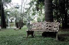 lonely bench (dminoruh) Tags: bench nature old rust tree banco natureza velho enferrujado