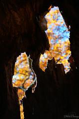 Cracks (Felicia Brenning) Tags: djurgårdskanalen djurgårdsbrunnskanalen stockholm djurgården sweden cracks bokeh tree nature autumn fall colors colorful sun light sony