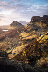 The Trotternish Tree (Dave Fieldhouse Photography) Tags: trotternish trotternishridge tree isleofskye scotland high highlands portrait landscape sunrise dawn march2017 fujixt2 fujifilm fuji rowan cleat clouds sky