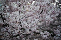 spring (Luca Ricagni) Tags: luca ricagni lucaricagni wwwlucaricagniit 50mm 50 d800 nikon nikkor flowers flower spring nature