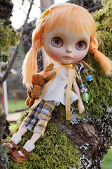 DSC00273 Sunshine watches the birds in her tree today.