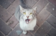 Lucky lick (Alex pozhydaev) Tags: cat kitty cats lovely love beauty today catlove catslove pet animals wild wildlife eyes eye photography street streetcat alexander p