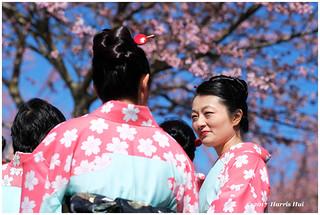 Sakura Ladies Under Sakura - Garry Point XP6290e