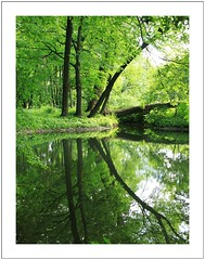 green (Norbert Kaiser) Tags: poetengang wanderweg wasser gottleuba spiegelbild spiegelung baum wald natur berggieshübel östlicheserzgebirgsvorland