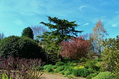 Bridgemere Gardens (Eddie Crutchley) Tags: europe england cheshire outdoor beauty blueskies trees gardens nature sunlight simplysuperb greatphotographers