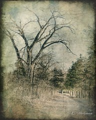 Keep Walking (LeAndra Huisman) Tags: path tress nature texture leandrahuisman minnesota landscape outdoor painterly surreal textured impressionistic branches abstract