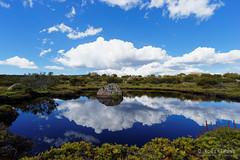 20170301-49-Rock in tarn (Roger T Wong) Tags: australia greatpinetier np nationalpark sel1635z sony1635 sonya7ii sonyalpha7ii sonyfe1635mmf4zaosscarlzeissvariotessart sonyilce7m2 tasmania wha wallsofjerusalem worldheritagearea alpine bushwalk camp clouds hike landscape reflectionrock trektramp walk